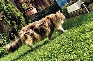 HDR Cat Photo