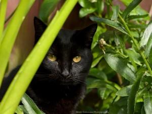 Next door cat