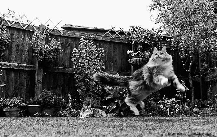 Cat flying in the air