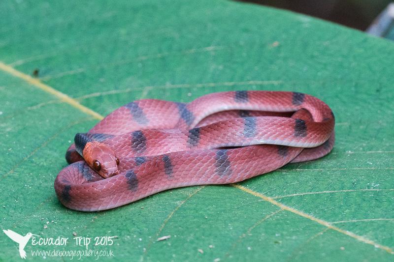 Snake found on a night walk